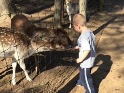 Noah Feeding Deer