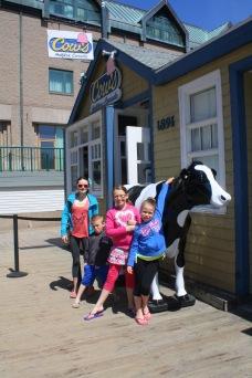 Cows ice cream!
