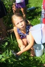 Ella picking blueberries