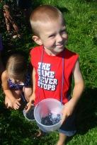 Noah picking blueberries