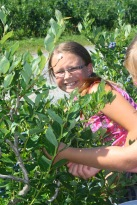 Caile picking blueberries