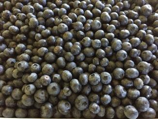 Lots of Blueberries