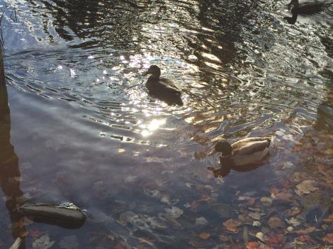 Photo 2015-10-24, 3 21 28 PM
