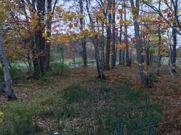 Photo 2015-10-25, 2 18 03 PM