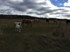 Pasture of animals on my run