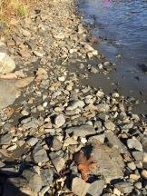 Leaf on the rocks