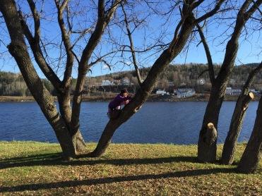 Alex climbing up a tree