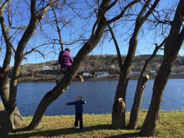 Alex climbing a tree, Noah wanted up too.