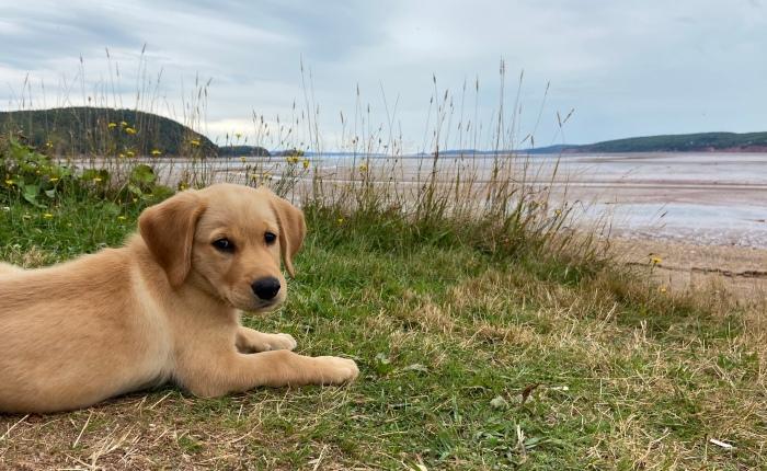 Meet Oakley